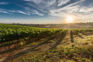 achat domaine viticole en provence